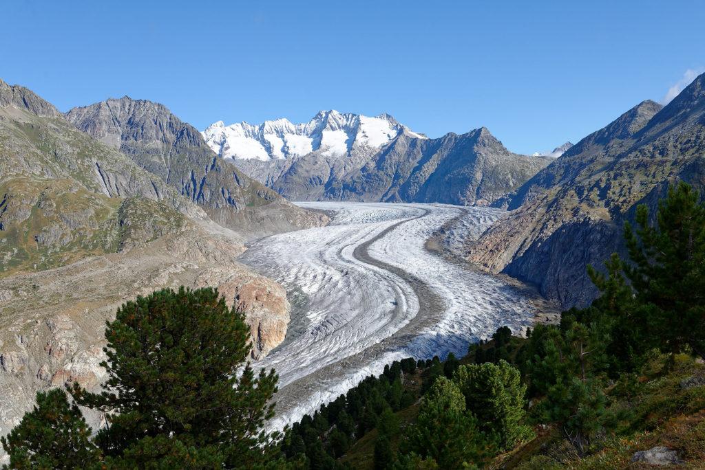 Glacier d'Aletsch vu depuis la forêt d'arolles