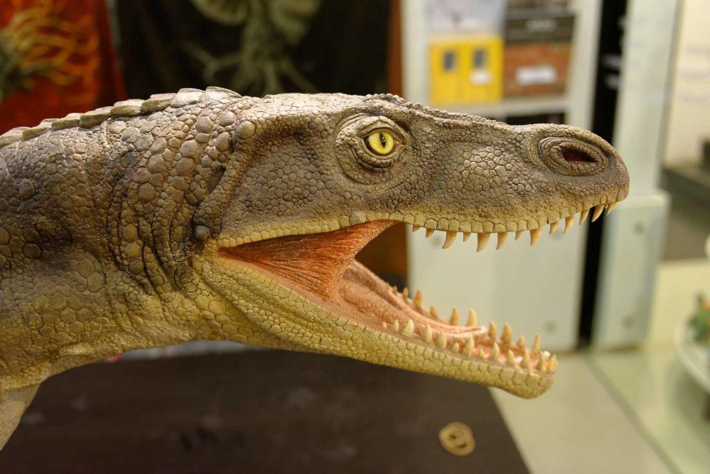 Archosaure au musée des fossiles de Meride