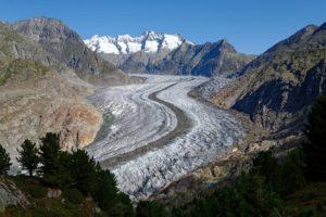Le glacier d'Aletsch vu de la forêt d'arolles