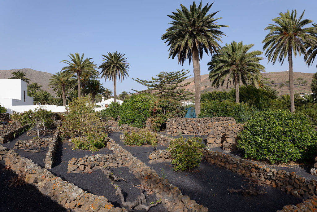 Palmier à Haria
