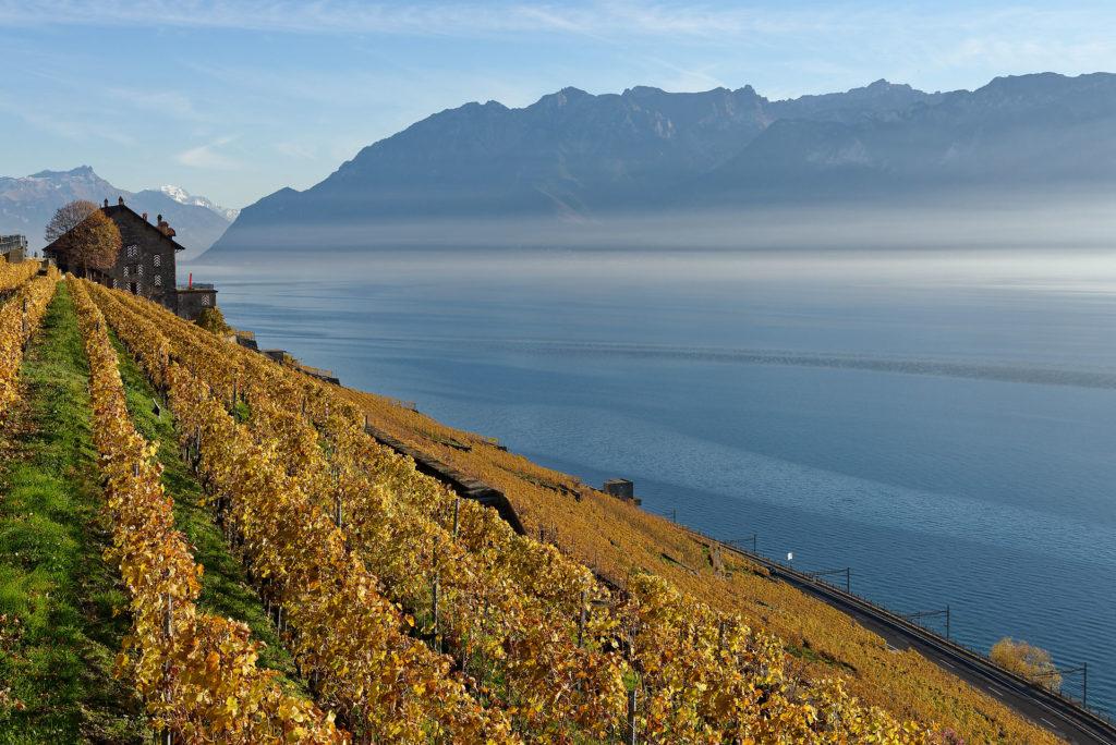 Vignoble de Lavaux en automne avec le Léman et les Alpes