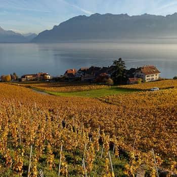 Vignoble en terrasses de Lavaux
