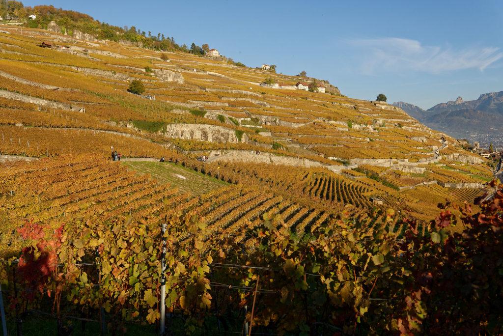 Vignoble de Lavaux en automne