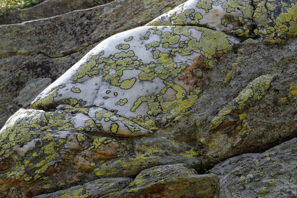 Veine de quartz et lichens