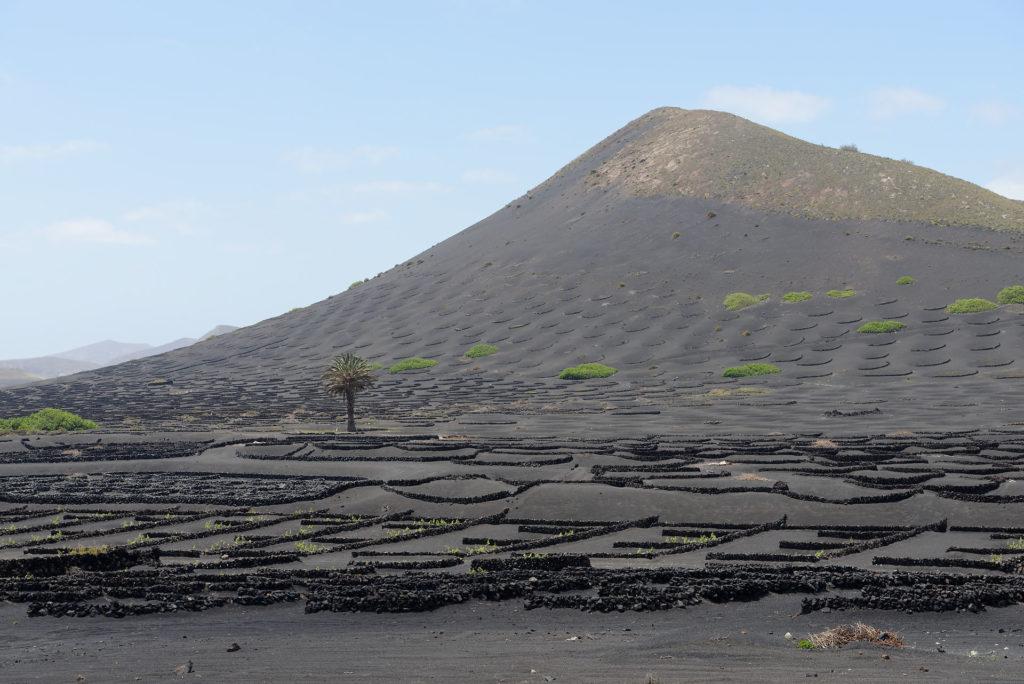 Vignoble et cône volcanique à Lanzarote