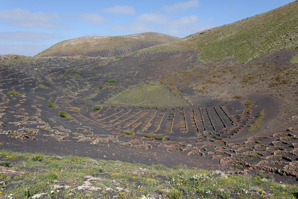 Vignoble dans un cratère, Lanzarote