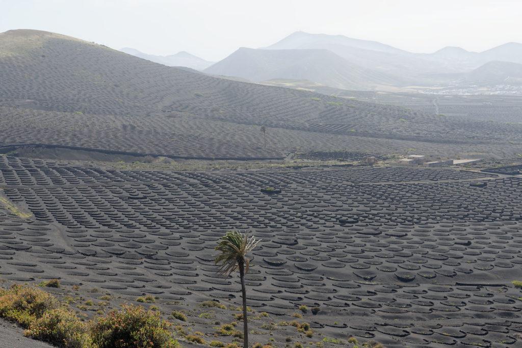 Vignoble de Lanzarote