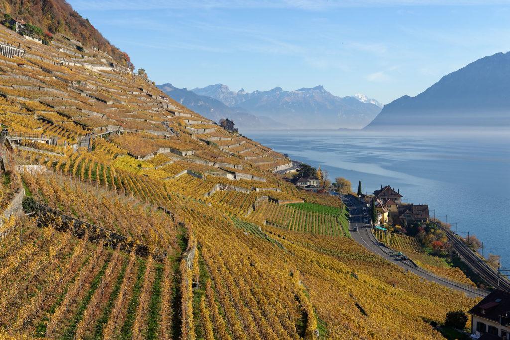 Dézaley: vignoble de Lavaux