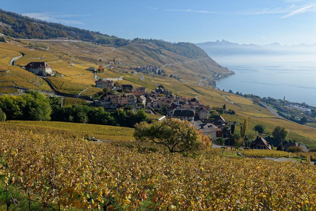 Vignoble de Lavaux en automne, avec le Léman et les Alpes