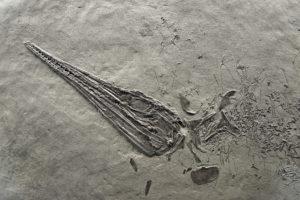Les plus beaux fossiles de Suisse